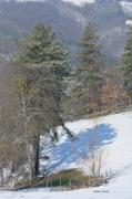 photo paysages reflet neige arbre ardeche : Réflection