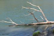 photo paysages rhone fleuve arbre mort berge : Arbre échoué sur une berge du Rhône