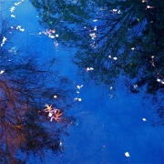 photo parc jouvet drome : Réflexion 1
