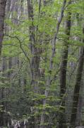 photo paysages sousbois drome bois de roques : Sous-bois de Roques