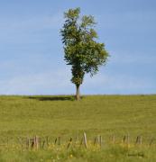 photo paysages drome des collines : Arbre solitaire sur la colline