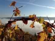 photo paysages saintjoseph ardeche : Treille de Saint Joseph en automne