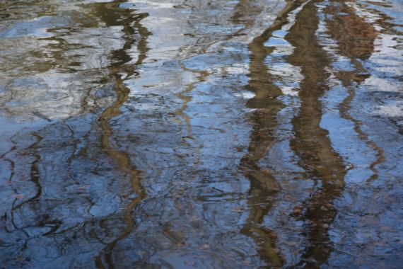 PHOTO reflet Rhône Forêt alluviale Paysages  - Reflets dans le Rhône