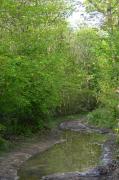 photo paysages drome bois de roques : Chemin du bois de Roques