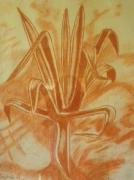 tableau autres plante sanguine orange : ma plante grasse