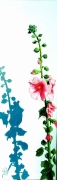 tableau fleurs rose tremiere noirmoutier mer : un air de NOIRMOUTIER
