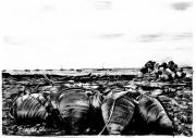 dessin : La pêche aux amphores
