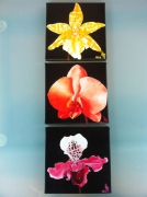 tableau fleurs orchidee : Triptyque Orchidées