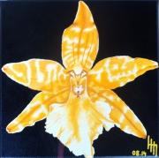 tableau fleurs orchidee : Orchidée 1