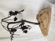 tableau fruits : La vigne