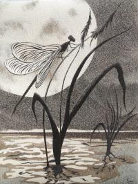 libellule au clair de lune