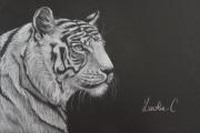dessin animaux tigre blanc noir crayon : Tigre blanc