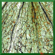 art textile mode autres : Graines