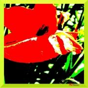 art textile mode fleurs coquelicot fleur rouge : Farfalla