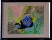 tableau animaux poisson ange mer recif fond : Poisson - ange empereur