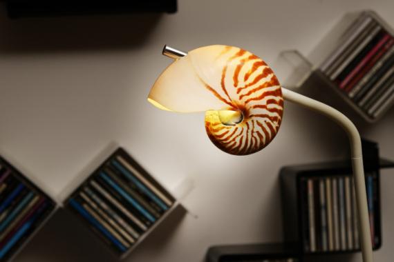 AUTRES Coquille Lampe Nautile Coquillage  - Nautiled