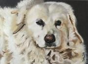 tableau animaux animalier chien chat cheval : Portrait animalier personnalisé