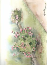 rose de l'automne
