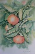 tableau fruits impression espagne : Impression de Cordoba(Espagne)