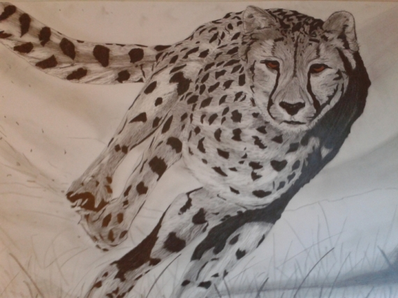DESSIN félin Animaux Crayon  - guépard