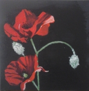 tableau fleurs : coquelicot 3