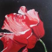 tableau fleurs : coquelicot 2