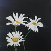 tableau fleurs : marguerite 3