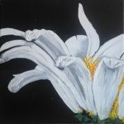 tableau fleurs marguerite : marguerite 1