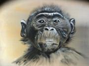 tableau animaux : Bonobo