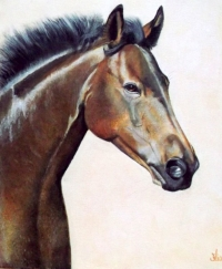 beautè equine