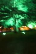 photo abstrait lumiere couleur photos 2015 delphine vigoureux poesie : l'arbre des origines