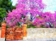 photo paysages arbre de judee arbre paysage portail : L'entrée en judée
