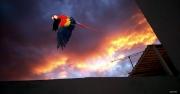 photo animaux perroquet ara bleu oiseau nature : L'ara bleu