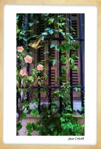 Le colibri et le rosier