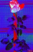 photo fleurs rose abstrait fleur : Rose de nuit
