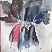 dessin nature morte radis rouge pastel : Radis