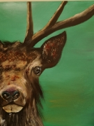 tableau animaux cerf animaux chasse : Cerf