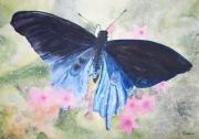 tableau animaux papillon bleu fleur aquarelle : papillon bleu