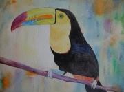 tableau animaux toucan exotique oiseau aquarelle : toucan