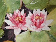 tableau fleurs nenuphar rose etang aquarelle : deux nénuphars roses