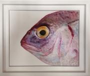 tableau animaux poisson peche mer : Poisson