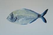 tableau animaux poisson mediterranee peche mer : Sar/ VENDU