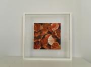 tableau marine mer coquillages orange : Coquilles Saint-Jacques