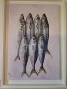 tableau animaux poisson peche mer : Maquereaux