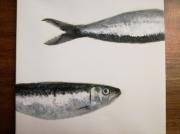 tableau animaux poisson sardine mer : Sardines en haut, en bas