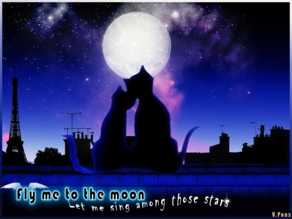 ART NUMéRIQUE graphisme chat lune Animaux  - Moon