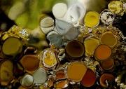 tableau nature morte arts plastiques lichens peinture aluminium : LICHENS DORES