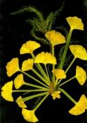 tableau fleurs creation collage fleurs ginkgo papyrus kakemono : FLEUR DE PAPYRUS
