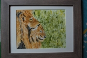 tableau animaux lion animaux : Mes lions