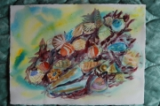 tableau marine coquillage mer : Coquilles de mer